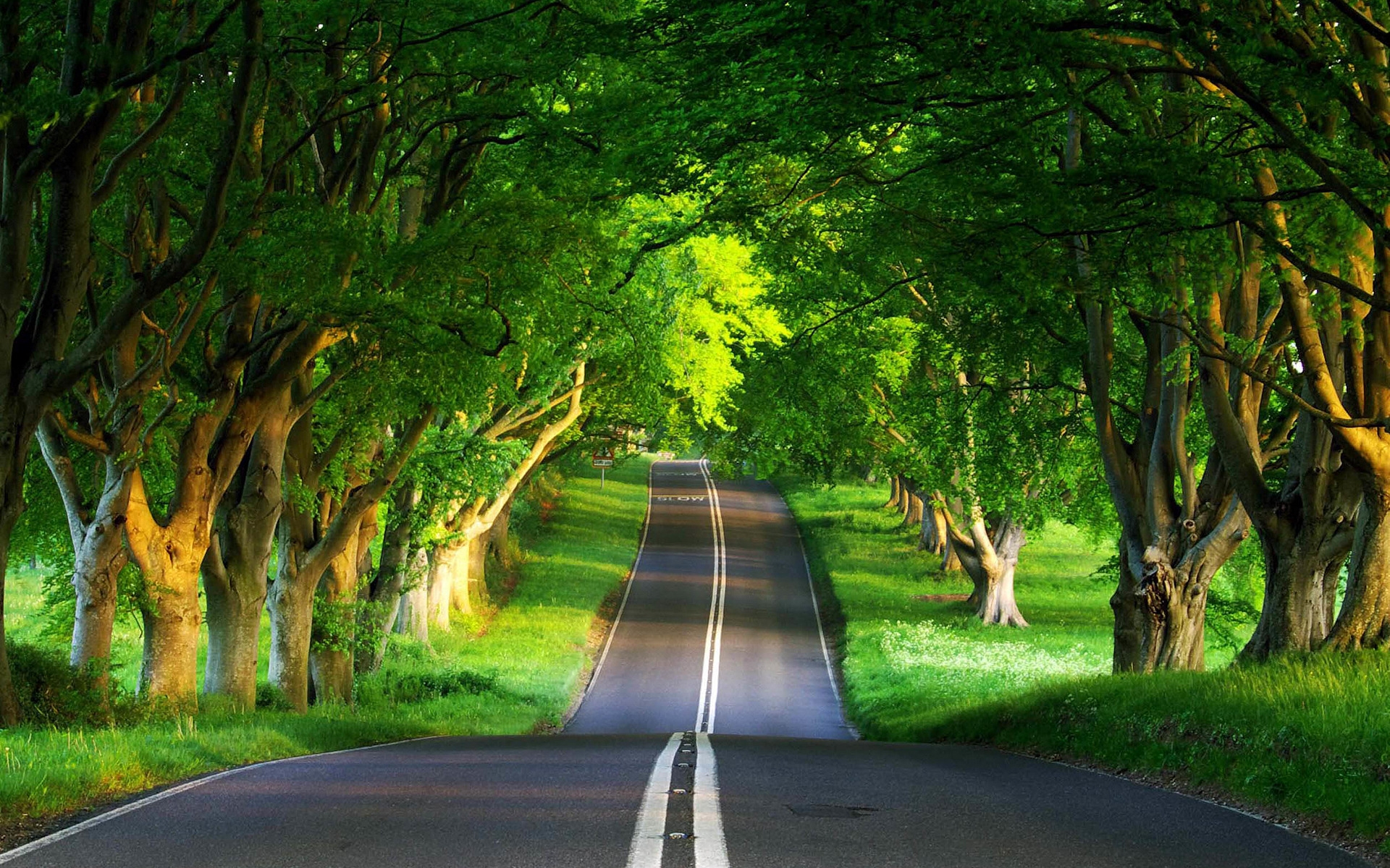 road-arch-of-green-trees-1920x1200-wide-wallpapers.net